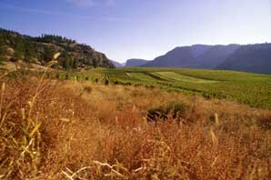 Golden Mile Vines and Grass-BC Wine Country-James O'Mara